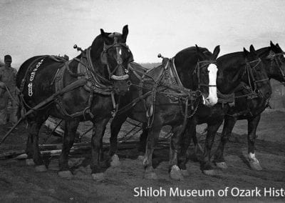 Draft horses used for site preparation during the construction of the Veterans Administration Hospital, Fayetteville, Arkansas, December 2, 1932