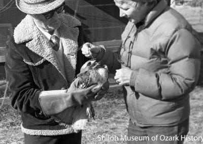 Joe and Vivian Stockton of Vi-Jo Wildlife Haven apply ointment to the beak of a red-tailed hawk, Siloam Springs, Arkansas, January 2, 1981.