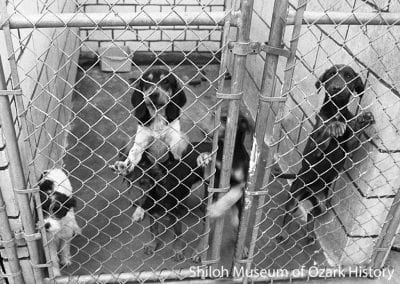 Dogs at the Springdale Animal Shelter, January 8, 1980.
