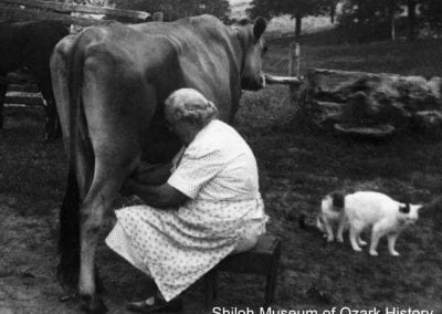Emma Bolinger milking a cow, Kingston, late 1940s-early 1950s.