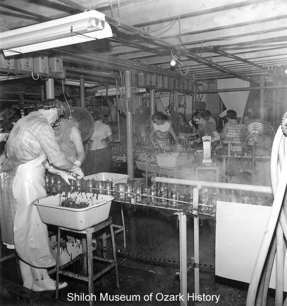 Workers packing spinach, Steele Canning Company, Lowell, Arkansas, April 1969.