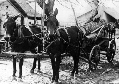 Mules pulling Pleasant Sigmon and his log wagon, Big Spring Township, east of Lowell, about 1910.