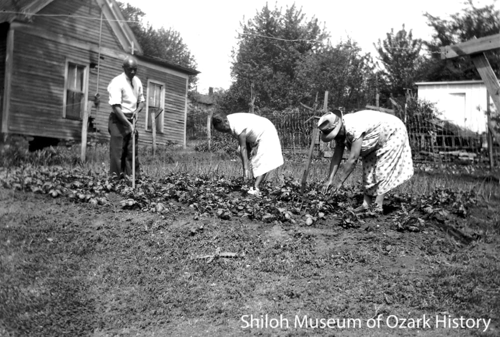 Chris Manuel family tend their victory garden, Fayetteville, 1943.