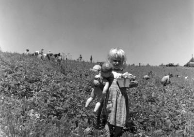 Strawberry pickers, Springdale area, June 1960.