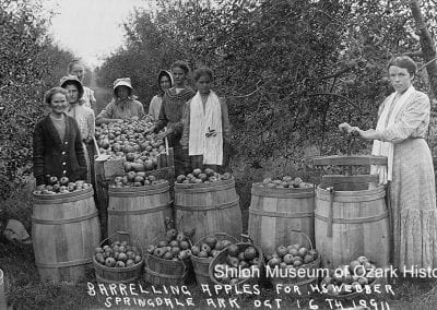 Barreling apples at the H. S. Webber orchard, southeast of Springdale, October 16, 1911.