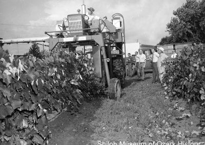 Grape harvester demonstration, Welch Grape Juice Company, Springdale, September 1970.