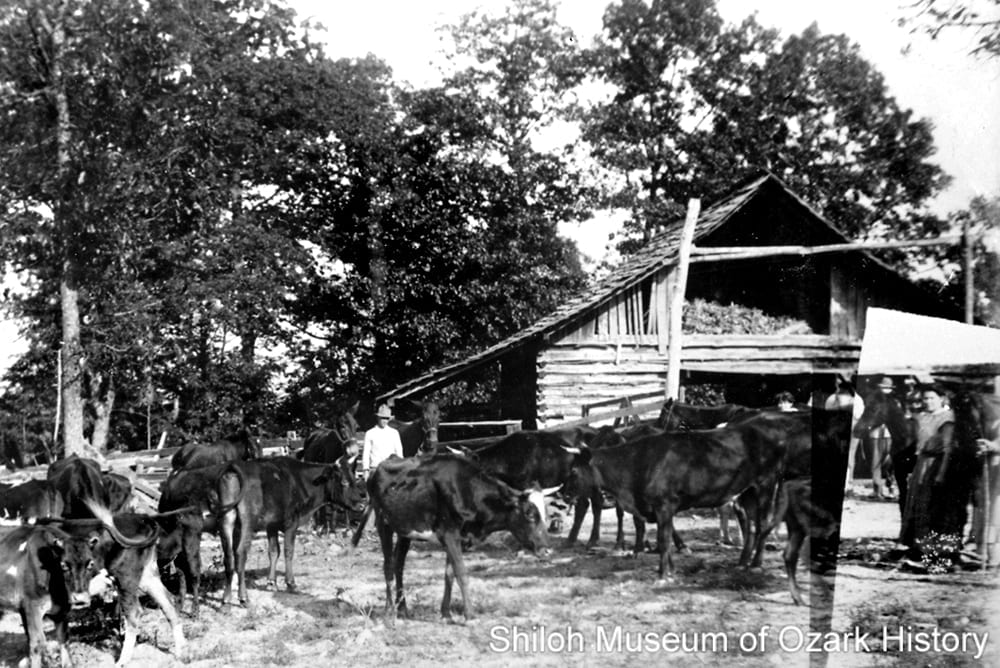 Robert Light's log barn, Pleasant Hill Township (Newton County, Arkansas), 1912.