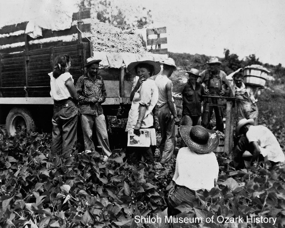 Picking beans at the McGarrah farm near Siloam Springs, Arkansas, in 1955