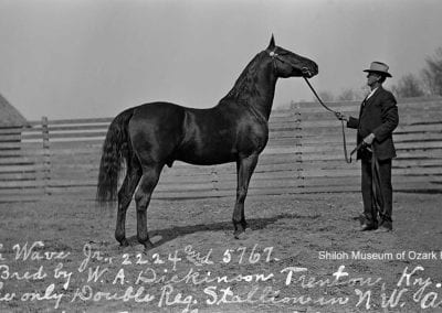 "William Farish with his double-registered stallion, ""High Wave,"" Johnson, Arkansas, early 1900s."