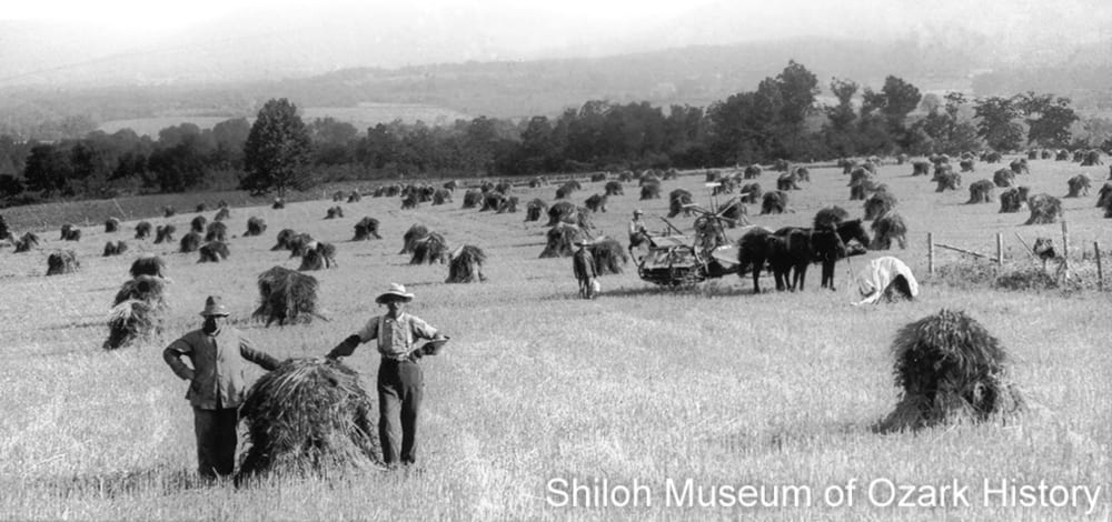 Harvesting wheat, Kingston area (Madison County, Arkansas), early 1920s.