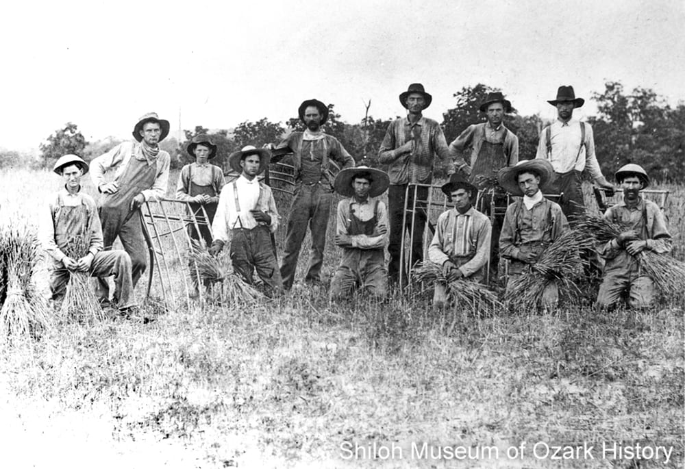 Harvesting wheat, Madison County, Arkansas, circa 1900