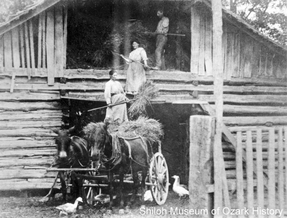 Tellitha Patton Light (bottom), Robert Light, and their daughter Annie Light storing hay in the barn loft, Pleasant Hill township (Newton County, Arkansas), early 1900s.