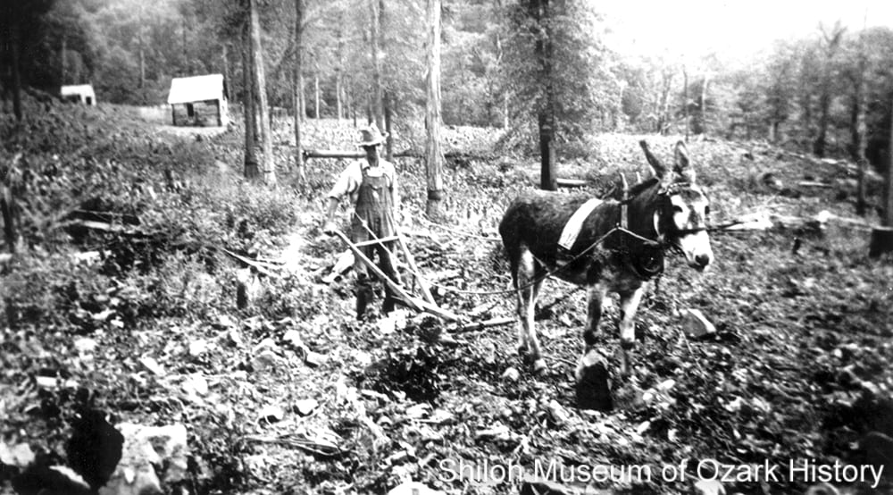 "Joe Rich plowing a field with the help of his mule, ""John the Baptist,"" Newton County, Arkansas, mid 1930s"