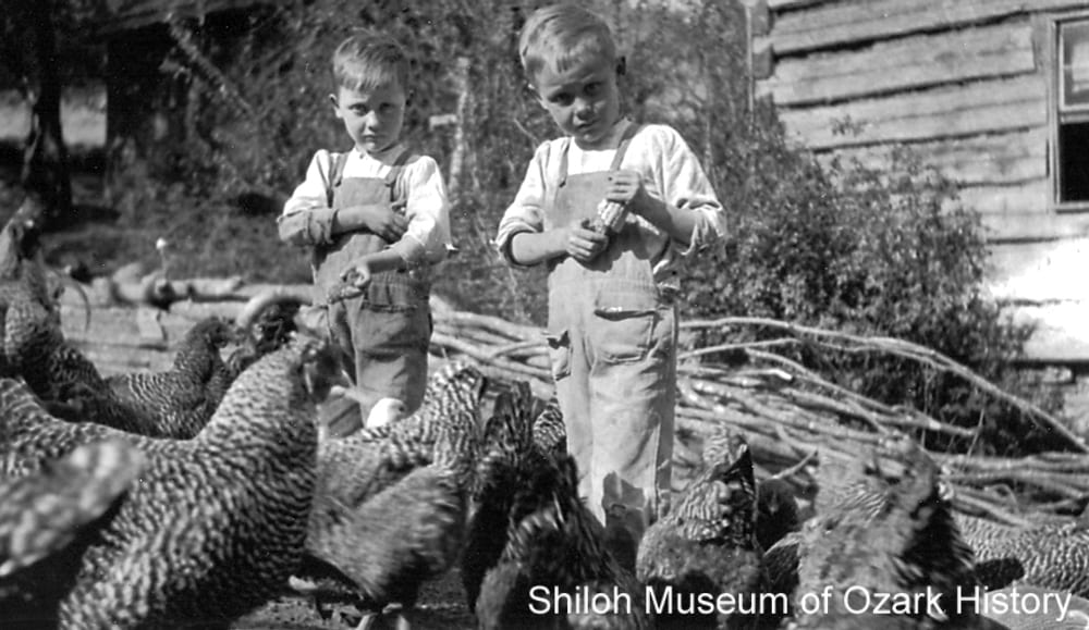 Young boys feeding dried corn to chickens, possibly Boston area (Madison County, Arkansas), 1900s–1910s.