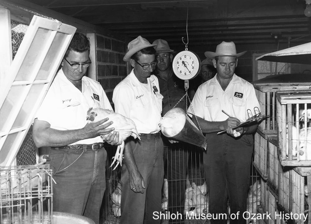Weighing chickens at Arbor Acres, near Tontitown, Arkansas, September 1959. With Jerry Hinshaw (left).