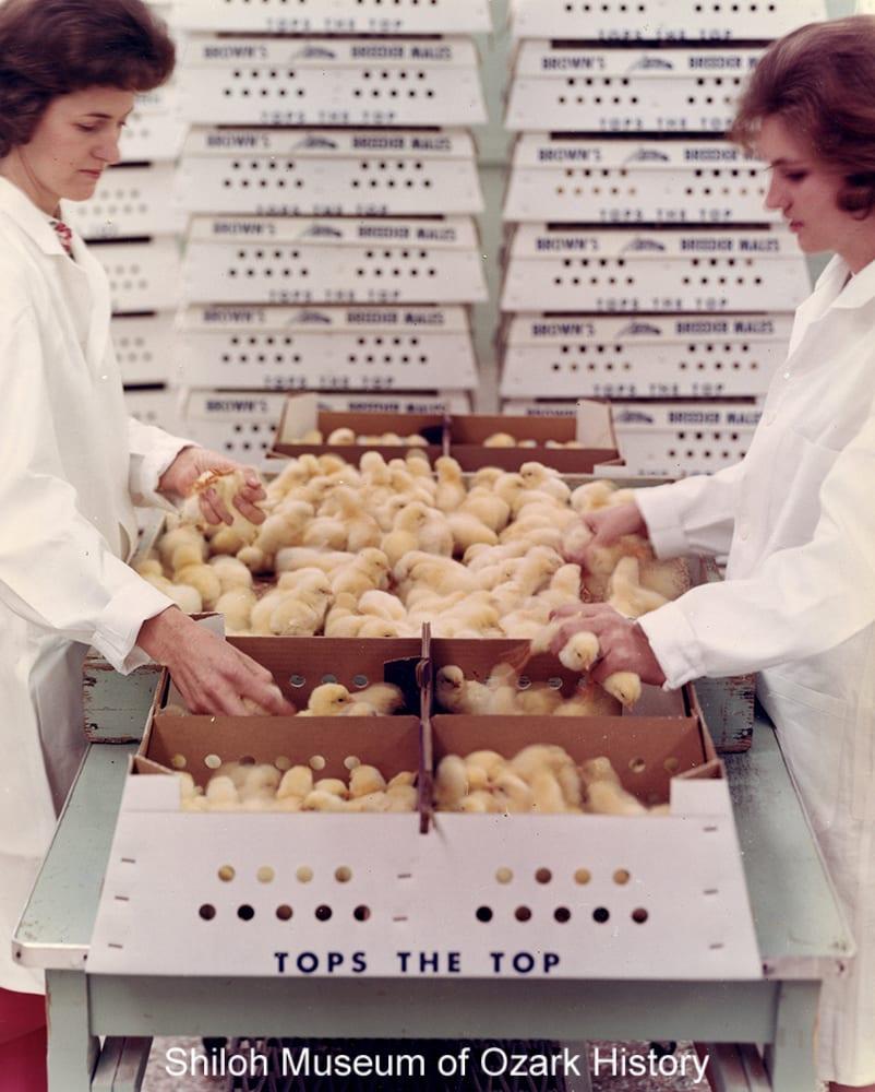 Boxed chicks at Brown's LedBrest, Inc., Springdale, Arkansas, circa 1970.