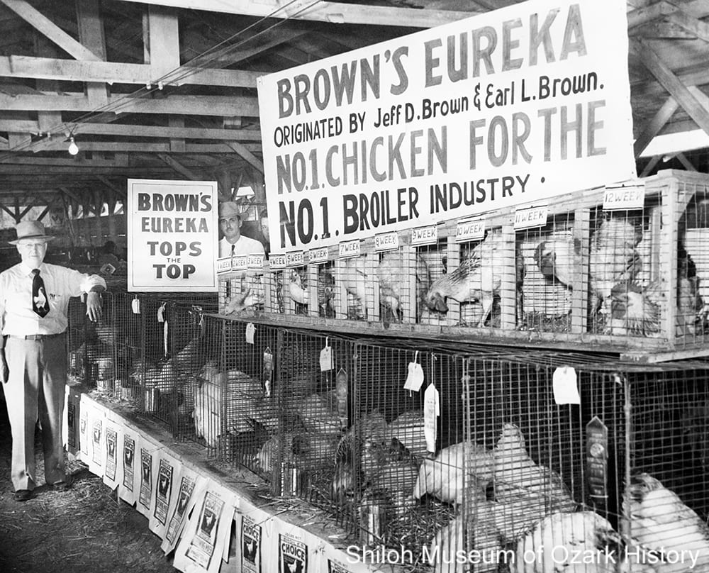 Jeff Brown with his Brown's Eureka Broadbreast line of breeding stock at the Washington County Fair, Fayetteville, Arkansas, 1951.