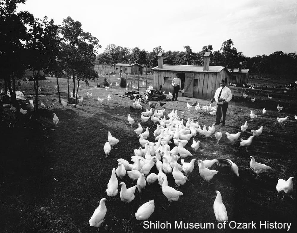 Chicken farm, Springdale, Arkansas, 1940s.