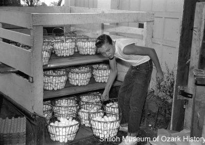 Boy carrying eggs at J. J. Arthurs' farm, Springdale, Arkansas, September 1959.
