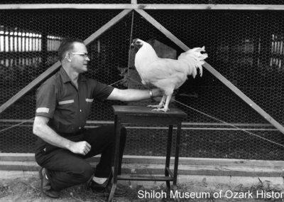 Gail Brown with a LedBrest Cockerel, Springdale,Arkansas, July 1961.