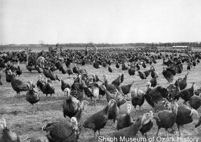 Turkey farm, near Springdale, Arkansas, 1960s.